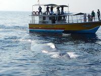 Galle Tour With Whale Watching