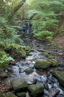 Wharnley Burn Water Fall