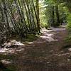 Whatapo Bay Walk