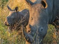 Day Tour to Akagera National Park for a Wildlife Safari