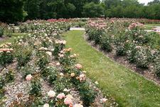 Whetstone Columbus Park Of Roses