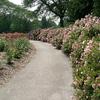 Whetstone Park Of Roses At Columbus