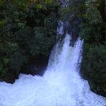 Whirinaki Waterfalls Track