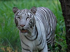 Zoológico de Mysore