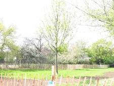 Whittington Park