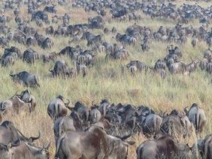 4 Days Best Of Maasai Mara National Reserve