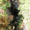 Wildcat Springs - Zion - Utah - USA