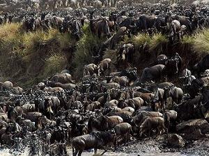 3 Days Safari - Serengeti And Ngorongoro Fotos
