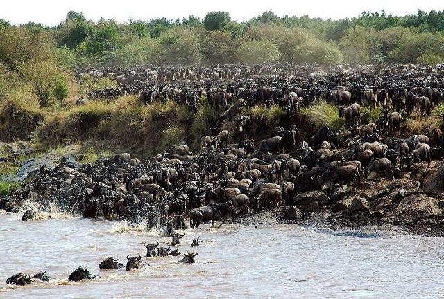 3 Days Safari - Serengeti And Ngorongoro Photos