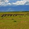 Exotic Kenya Safari