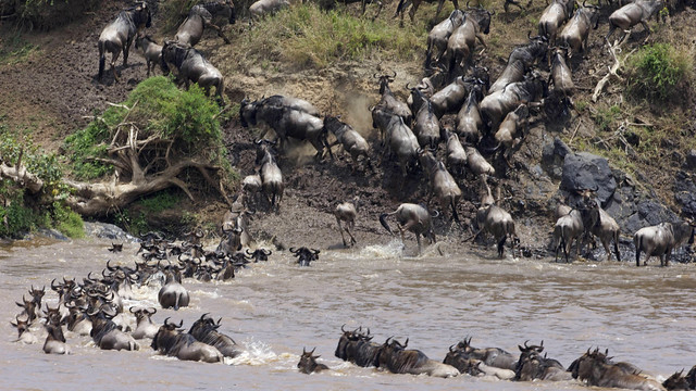 Kenya Migration Safaris Photos