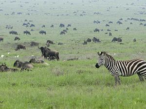 Tanzânia Norte Circuito Safari 7 dias Photos
