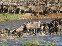 Safari Circuito Norte da Tanzânia 4 dias