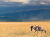 3 Days / 2 Night Safari To Amboseli National Park