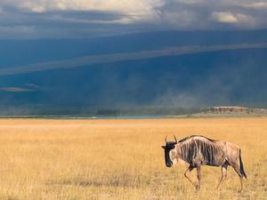 3 Days / 2 Night Safari To Amboseli National Park