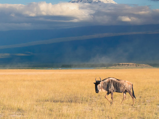 3 Days / 2 Night Safari To Amboseli National Park Photos