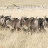 Rhino Charge Safari 4 días