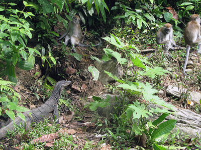 Wildlife In The National Park