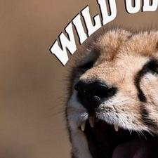 Wild Odyssey Logo