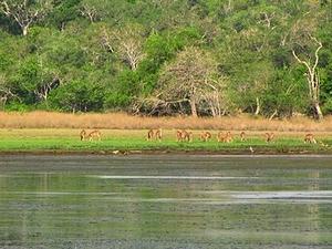 Wilpattu Parque Nacional
