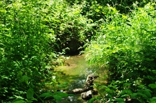 Wilsonville Memorial Park Boeckman Creek