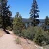Woodland Trail 1E23