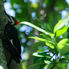 Woodpecker In Boyd Hill Nature Preserve