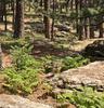 Woods Canyon Lake Trail