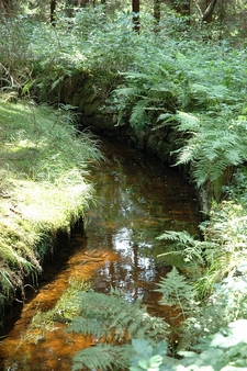 Ditch Near Altenau