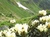 Western Caucasus Nature Reserve
