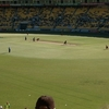 Westpac Stadium Cricket Luving Crowd