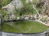 Willett Hot Springs