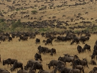 Budget travel deals on Tanzania safaris with Chelsea Tours