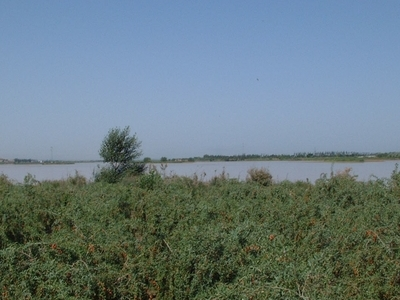 Wolfberry Fields In Zhongwei