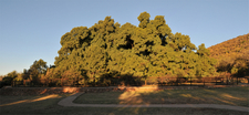Wonderboom Nature Reserve