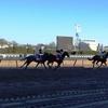 2012 Wood Memorial Stakes
