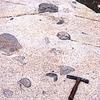 Xenoliths In Granodiorite Of The Alta Stock