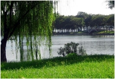 Xuanwulake Willows