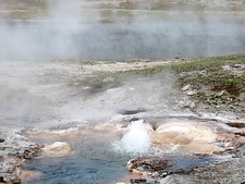 Young Hopeful Geyser - Yellowstone - USA