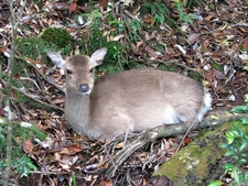 Kirishima-Yaku National Park