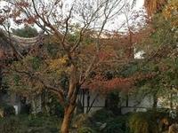 Yiyuan Garden