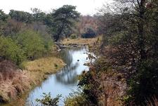 Zambezi - Victoria Falls National Park - Zimbabwe