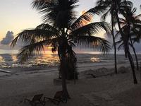 Zanzibar Excursion Trips - Dolphin Tours & Jozani Forest