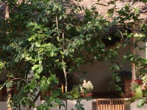 Muba at Mukki