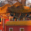 Chinese Garden In Partnership With Kunming
