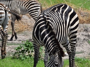 Safari Day Tour Lake Manyara