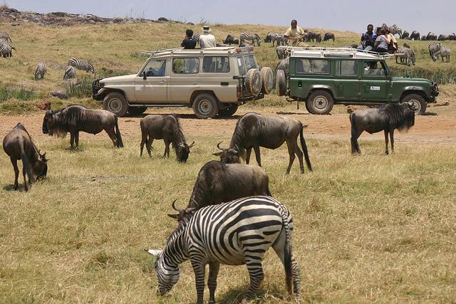 6 Days Group Join Safaris - Tanzania Photos