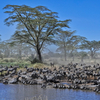 5 Day Tanzania Tented Camp Safari