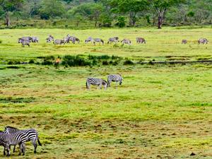 Arusha Safari Package Photos