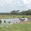 2 Days Magical Lake Nakuru